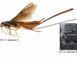 Insect Named after Former Islander
