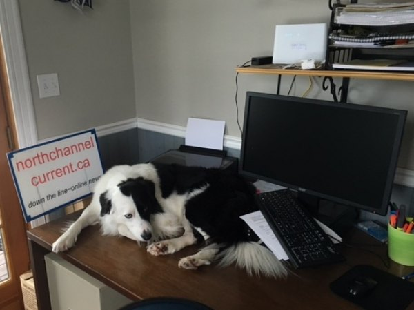 Our crazy border collie who sleeps on the news desk when not occupied.